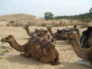 camel-1360547-1280x960